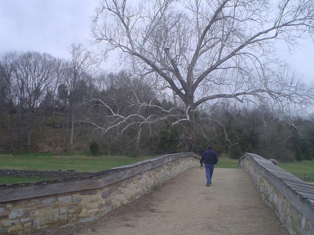 1c Witness Tree